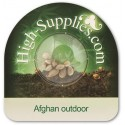 Graine de Afghan outdoor